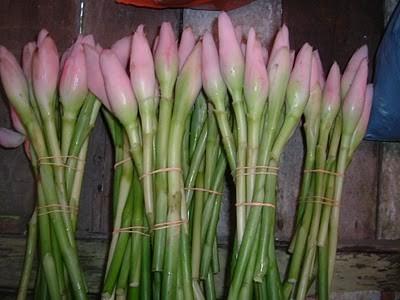 Pewangi Badan dari Bunga Kecombrang