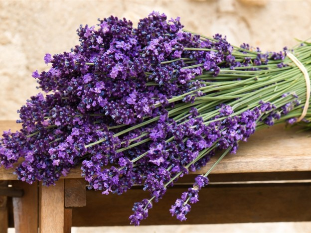 Efek Relaksasi Dari Wangi Bunga Lavender  Membangkitkan Kepercayaan Pihak Lain